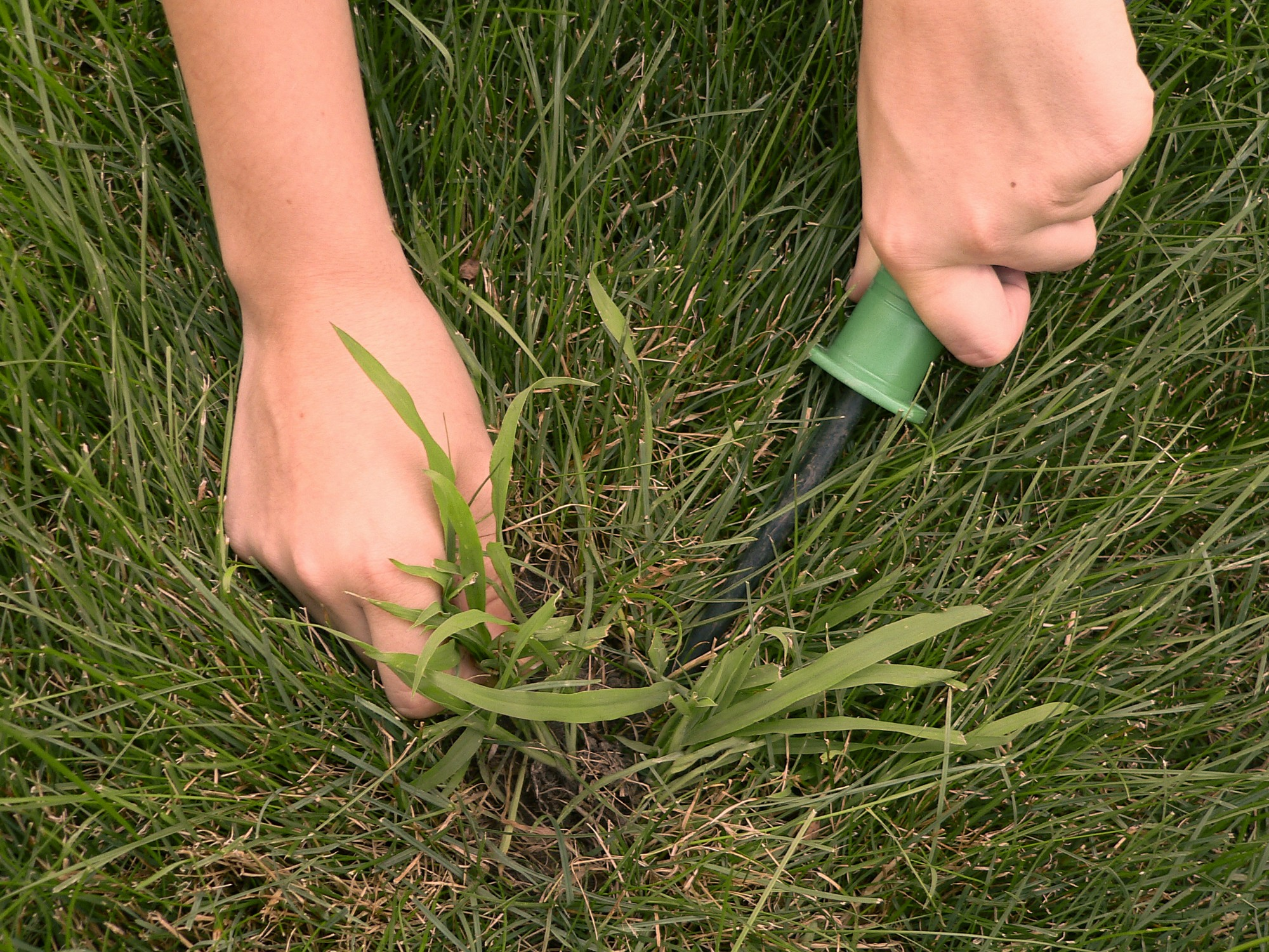 Is that Crabgrass or Quackgrass in Your Lawn?